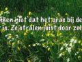 Mooi in bloei